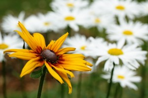 Picture of flower as keyword generator